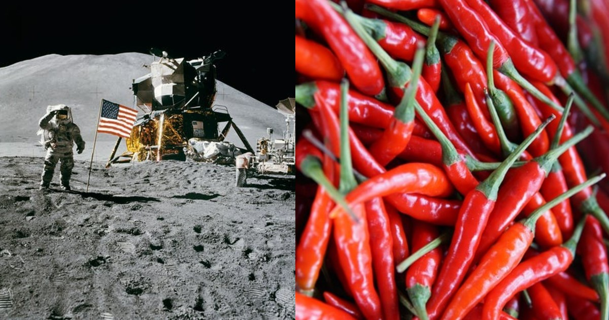 In A First For NASA, Astronauts Try To Grow Chile Peppers On International Space Station